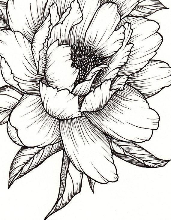 Peony Flower, Art PRINT of Pen Illustration, Flower Drawing, Floral Tattoo, Botanical Line Drawing, Wallpaper